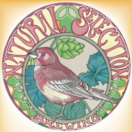 Image result for natural selection 2011 finch